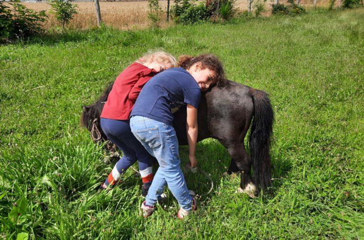 Rencontre avec les poneys